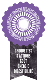 croquette-3-actions.png